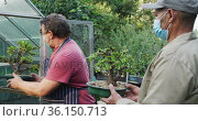 Diverse male gardeners wearing face masks, taking care of bonsai tree at garden center. Стоковое видео, агентство Wavebreak Media / Фотобанк Лори