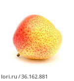 Large very round yellow and red pear fruit isolated on white background. Стоковое фото, фотограф Tamara Kulikova / Фотобанк Лори