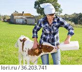 female employee feeding newborn calf on grass pasture. Стоковое фото, фотограф Татьяна Яцевич / Фотобанк Лори