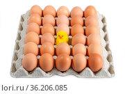 Eier auf eine Kartonpallette auf hellem Hintergrund. Стоковое фото, фотограф Zoonar.com/Birgit Reitz-Hofmann / age Fotostock / Фотобанк Лори