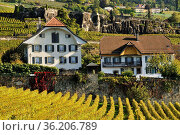 Rivaz village on the shore of Geneva Lake between Lavaux vineyards... Стоковое фото, фотограф Danuta Hyniewska / age Fotostock / Фотобанк Лори