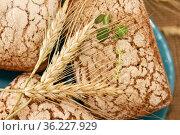 Homemade yeast-free rye bread on a blue plate with ears. Стоковое фото, фотограф Galina Barbieri / Фотобанк Лори