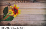 On a light wooden rustic background a beautiful rudbecia flower with... Стоковое фото, фотограф Zoonar.com/Galina Tolochko / easy Fotostock / Фотобанк Лори
