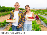 Happy young couple stands on a plantation holding crates of strawberries. Стоковое фото, фотограф Яков Филимонов / Фотобанк Лори