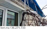 Зимний пейзаж на севере России, панорамный вид. Стоковое фото, фотограф Андрей Атрощенко / Фотобанк Лори
