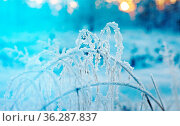 Winter snowy forest at sunset. Beautiful Christmas landscape.Shallow... Стоковое фото, фотограф Zoonar.com/MYCHKO / easy Fotostock / Фотобанк Лори