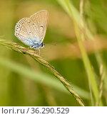 Небольшая бабочка сидит среди травы. Стоковое фото, фотограф Игорь Низов / Фотобанк Лори