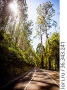 The Black Spur after Black Saturday bushfires near Healesville, Victoria... Стоковое фото, фотограф Zoonar.com/Chris Putnam / easy Fotostock / Фотобанк Лори