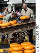 Vorbereitung auf den Käsemarkt von Alkmaar, Niederlande / Preparing... Стоковое фото, фотограф Zoonar.com/Pant / age Fotostock / Фотобанк Лори