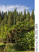 Südliche Pflanzenwelt mit tropischen Bäumen und Stauden in einem italienischen... Стоковое фото, фотограф Zoonar.com/Eder Christa / easy Fotostock / Фотобанк Лори