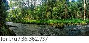 Wasserlauf im Bereich des Wailua River auf Kauai, Hawaii, USA. Small... Стоковое фото, фотограф Zoonar.com/Dirk Rueter / easy Fotostock / Фотобанк Лори