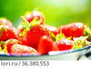 Erdbeeren frisch nach der Ernte im Garten, in einem Sieb liegend,... Стоковое фото, фотограф Zoonar.com/Kai Schirmer / easy Fotostock / Фотобанк Лори