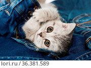 ESY-059581238. Стоковое фото, фотограф Zoonar.com/Judith Kiener / easy Fotostock / Фотобанк Лори