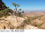 Landscape in Tigray province close to Adigrat, Ethiopia, Africa. Стоковое фото, фотограф Zoonar.com/Alexander Ludwig / easy Fotostock / Фотобанк Лори