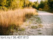 Rural Countryside White Sandy Road Going Ahead Along The Growing Yellow... Стоковое фото, фотограф Ryhor Bruyeu / easy Fotostock / Фотобанк Лори