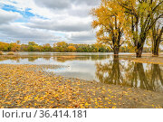 Flooded shore of Missouri River at Brownville, Nebraska with cottonwood... Стоковое фото, фотограф Zoonar.com/Marek Uliasz / easy Fotostock / Фотобанк Лори