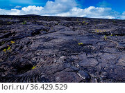 Landschaft aus erkalteten Lavaströmen im Hawaii Volcanoes Nationalpark... Стоковое фото, фотограф Zoonar.com/Dirk Rueter / easy Fotostock / Фотобанк Лори