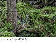 Der Wanderweg von Oetz an den Piburger See führt durch diesen herrlichen... Стоковое фото, фотограф Zoonar.com/Eder Christa / easy Fotostock / Фотобанк Лори
