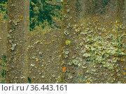 Bemoostes und verwittertes altes Blech im Detail als Hintergrund. Стоковое фото, фотограф Zoonar.com/Birgit Reitz-Hofmann / easy Fotostock / Фотобанк Лори