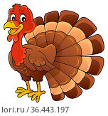 Turkey bird theme image 1 - picture illustration. Стоковое фото, фотограф Zoonar.com/Klara Viskova / easy Fotostock / Фотобанк Лори