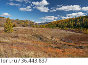 North Chuiskiy Ridge with road on foreground and larch forest and snow mountains are on background. Стоковое фото, фотограф Serg Zastavkin / Фотобанк Лори