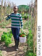 African american gardener carrying basket of vegetables in garden. Стоковое фото, фотограф Яков Филимонов / Фотобанк Лори