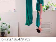 Woman doing aerial yoga in studio. Female practicing air yoga in hammock... Стоковое фото, фотограф Zoonar.com/Max / easy Fotostock / Фотобанк Лори