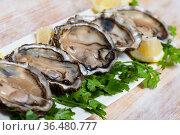 Opened raw oysters with lemon and parsley. Стоковое фото, фотограф Яков Филимонов / Фотобанк Лори