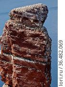 Lange Anna mit nistenden Voeglen und der Nordsee, Helgoland, Schleswig... Стоковое фото, фотограф Zoonar.com/Stefan Ziese / age Fotostock / Фотобанк Лори