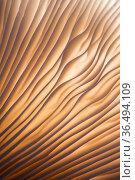 Backlit gills. Mushroom (species unknown), Bolderwood, The New Forest, Hampshire, UK. November 2018. Стоковое фото, фотограф Ross Hoddinott / Nature Picture Library / Фотобанк Лори
