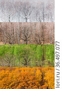 Collage from panoramic views of forest in four divisions of the year... Стоковое фото, фотограф Zoonar.com/Valery Voennyy / easy Fotostock / Фотобанк Лори