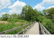 Brücke, steg, holzbrücke, holzsteg, Dreifelder Weiher , Westerwald... Стоковое фото, фотограф Zoonar.com/Volker Rauch / easy Fotostock / Фотобанк Лори