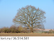 Baum , Feld, acker, landschaft, natur, taunus, hessen, kahl, unbelaubt... Стоковое фото, фотограф Zoonar.com/Volker Rauch / easy Fotostock / Фотобанк Лори