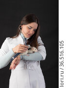 Doctor examines the rat. Стоковое фото, фотограф Argument / Фотобанк Лори