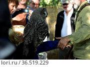 Falconer Mursa with Great grey owl (Strix nebulosa) Стоковое фото, фотограф Zoonar.com/Arvidas Saladauskas / age Fotostock / Фотобанк Лори
