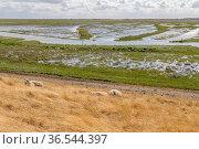 Coastal impression of Spiekeroog, one of the East Frisian Islands... Стоковое фото, фотограф Zoonar.com/Achim Prill / easy Fotostock / Фотобанк Лори