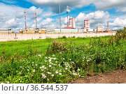 Daisy wildflowers on a background of a chemical plant in sunny day. Стоковое фото, фотограф Zoonar.com/Alexander Blinov / easy Fotostock / Фотобанк Лори