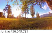 Sunny rural meadow at mountain landscape with green grass, trees and sun rays. Diagonal movement on motorised slider dolly. Стоковое видео, видеограф Александр Маркин / Фотобанк Лори