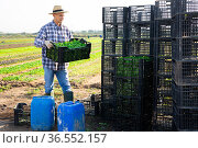 Man working at vegetable farm, stacking crates. Стоковое фото, фотограф Яков Филимонов / Фотобанк Лори