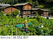 Gemüsegarten mit Vogelscheuche, Walliser Chalets, Binn, Binntal, ... Стоковое фото, фотограф Zoonar.com/Pant / age Fotostock / Фотобанк Лори