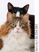 ESY-059730779. Стоковое фото, фотограф Zoonar.com/DZIERZAWA / easy Fotostock / Фотобанк Лори