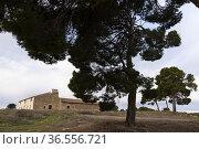 Centennial pine trees (Pinus halepensis). Los Pozuelos. Almansa. ... Стоковое фото, фотограф Antonio Real / age Fotostock / Фотобанк Лори
