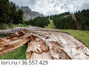 Gefällte Bäume in den Alpen. Стоковое фото, фотограф Zoonar.com/Nailia Schwarz / age Fotostock / Фотобанк Лори