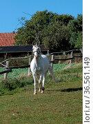 Schimmel auf einer Weide. Стоковое фото, фотограф Zoonar.com/Martina Berg / easy Fotostock / Фотобанк Лори