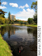 River Torrens in Adelaide, South Australia, Australien. River Torrens... Стоковое фото, фотограф Zoonar.com/Dirk Rueter / easy Fotostock / Фотобанк Лори