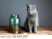 Zwei Katzen neugierig auf Katzenfutter in Glas. Стоковое фото, фотограф Zoonar.com/Nailia Schwarz / easy Fotostock / Фотобанк Лори