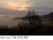 Sonnenaufgang, Nebel, Baeume, Wolken. Стоковое фото, фотограф Zoonar.com/Gerd Herrmann / age Fotostock / Фотобанк Лори