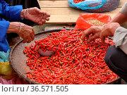 Hot Pepper in the market, Lao Cai province, Bac Ha, weekly market... Стоковое фото, фотограф Chew Chun Hian / age Fotostock / Фотобанк Лори