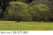 Sinntal, Wiesen, Bäume, Landschaft. Стоковое фото, фотограф Zoonar.com/Gerd Herrmann / age Fotostock / Фотобанк Лори