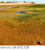 Swamp on the Shore of Atlantic Ocean in Portugal near the City of Faro. Стоковое фото, фотограф Zoonar.com/gkuna / easy Fotostock / Фотобанк Лори
